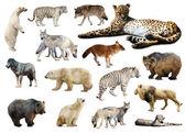 Cheetah and other predators. — Стоковое фото