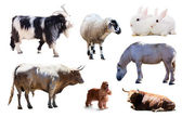 Set of farm animals. Isolated with shade — Stock fotografie