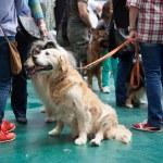 XIX national dog exhibition — Stock Photo #50923935