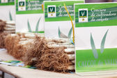 Competition for the best grown onions in Valls — Stock Photo