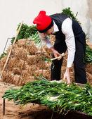 Man in traditional peasant dress preparing onions — Stock Photo