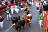 Encierro - functioneren van de bulls — Stockfoto