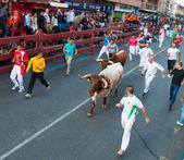 Running of the Bulls — Stock Photo