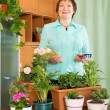 Mature woman with plants at home — Stock Photo #50938845