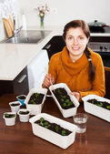 Girl in kitchen with seedlings — Stock Photo