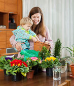 Female gardener transplanting potted flowers — Stock Photo