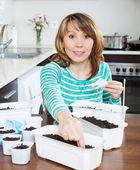 Female gardener sowing seedlings   — Stock Photo
