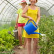 Women watering vegetables — Stock Photo #5156863