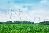 Green corn field and transmission line — Stock Photo