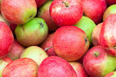 Red small apples, autumn crop close up — Stock Photo