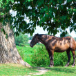 Royalty-Free Stock Photo: Old tired horse near the tree