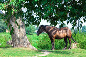 Old tired horse near the tree — Stock Photo