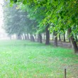 Green alley in summer park at morning with fog — Stock Photo
