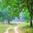 Road running between green trees in summer — Stock Photo #20897007