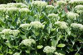 Green plant Green plant — Stock Photo