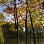 Autumn landscape of lake — Stock Photo #13679750