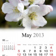 Stock Photo: 2013 Calendar. May