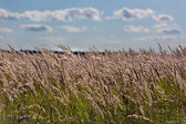 A photo of a wheat field — Stock Photo