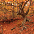 Autumn forest, sunny day — Stock Photo #14533223