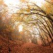 Autumn forest, sunny day — Stock Photo