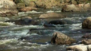 Водопад на реке Горный Тикич. село Буки, Украина — Стоковое видео