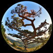 Complete circular fisheye view of the Pine on top of the mountai — Stock Photo