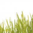 Green grass on the white background — Stock Photo #8424077