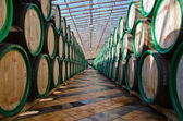 Barrels with wine — Stock Photo