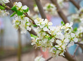 Young flowers on a tree — Stock Photo