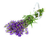 Bouquet of lavender — Stock Photo