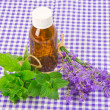 Lavender and spearmint — Foto Stock
