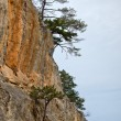 Pines and cliff — Stock Photo