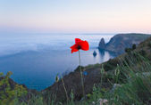 Fleur de coquelicot et de la mer — Photo