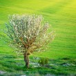 Lonely tree in meadow - Stock Photo