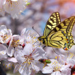 Butterfly and white flower. - Stock Photo