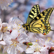 Butterfly and white flower - Stock Photo