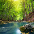 Stock Photo: River in mountain forest.