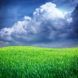 Stock Photo: Grass and deep blue sky.