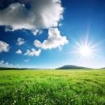 ������, ������: Green meadow