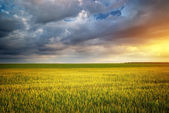 Bellissimo paesaggio — Foto Stock