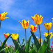 Stock Photo: Tulips on sky