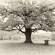Big tree — Stock Photo #18742331