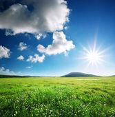 緑の草原 — ストック写真