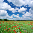 Beautiful meadow — Foto Stock