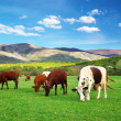 Royalty-Free Stock Photo: Cows on green meadow