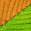 Macro of green leaf. — Stock Photo