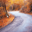 Road in autumn wood. — Stock Photo #18764065