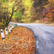 Stock Photo: Road in autumn wood.