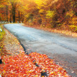 Road in autumn wood. — Stock Photo #18764081