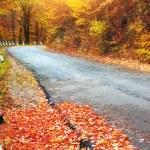 Road in autumn wood. — Stock Photo #18764081